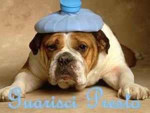 Guarisci presto (cane)