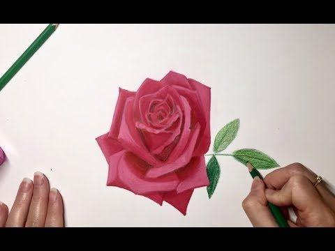 (33) Comment dessiner une rose d'après modèle - Tuto et astuces pour dessiner une rose - YouTube