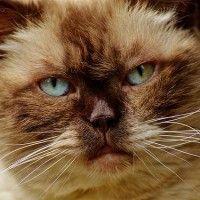 #dogalize Megacolon nel gatto: cause, sintomi, diagnosi e cura #dogs #cats #pets