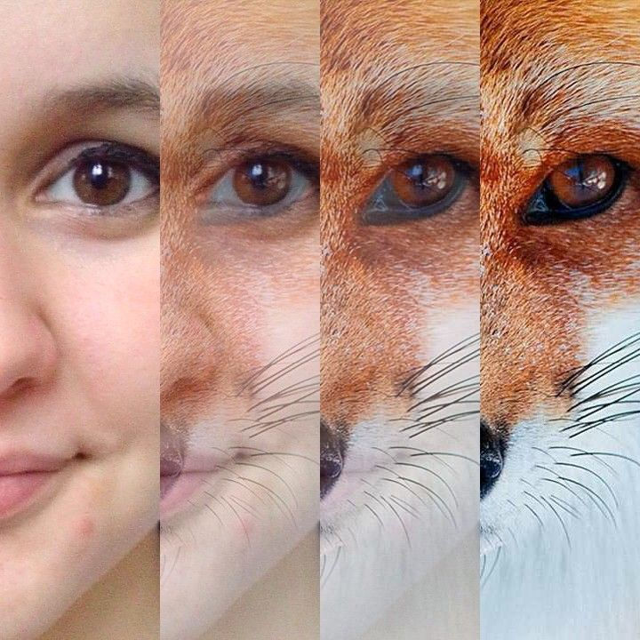 What does the fox say??