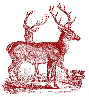 Free Vintage Printable - Deer - Christmas - The Graphics Fairy