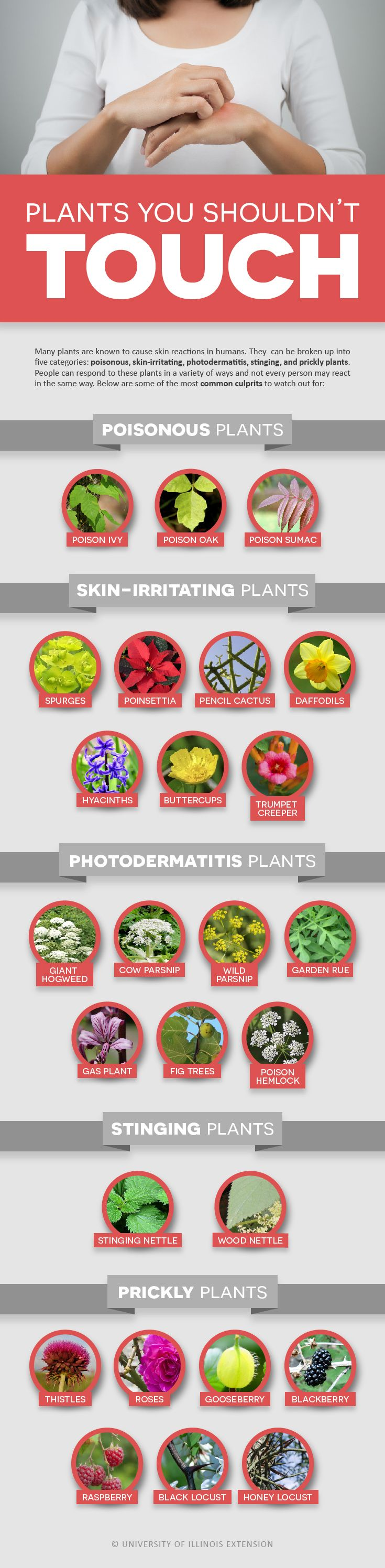 best 25 poisonous plants ideas on pinterest plants toxic to