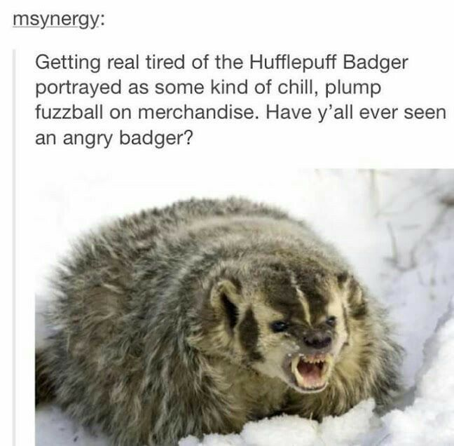 Hufflepride...yes, we like to be the happy fuzzball, but cross us or one of our friends and you will get the angry badger.