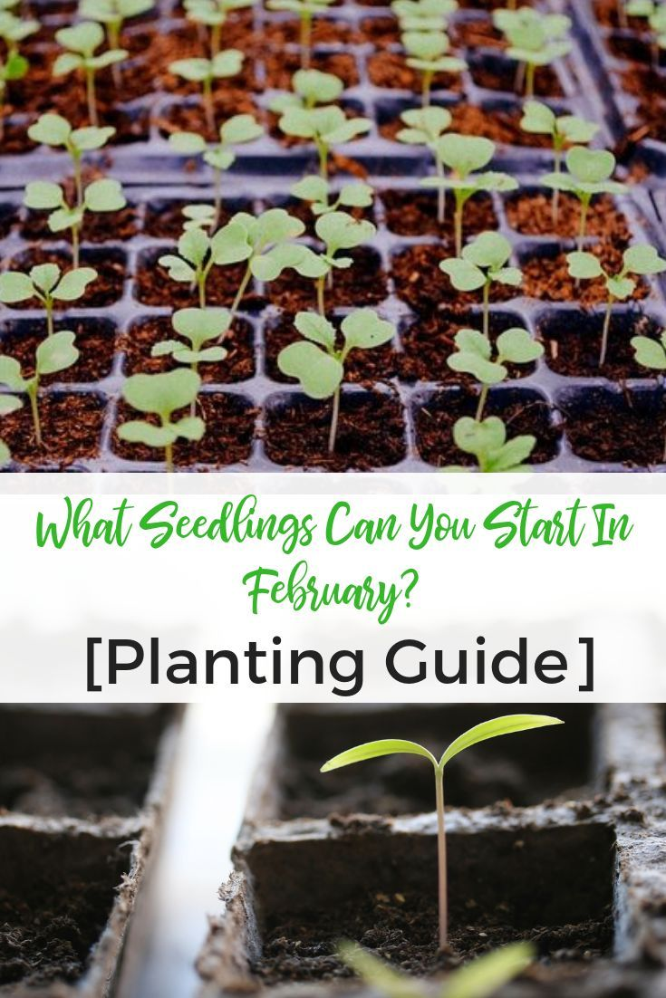 What Seedlings Can You Start In February Planting Guide