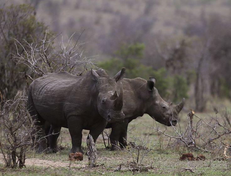 Tjuvjägare dödade noshörningar och tog svensk kvinna som gisslan i Sydafrika | Aftonbladet