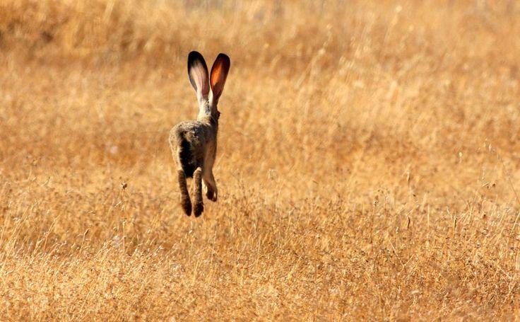 Bunny hopping HD Wallpaper