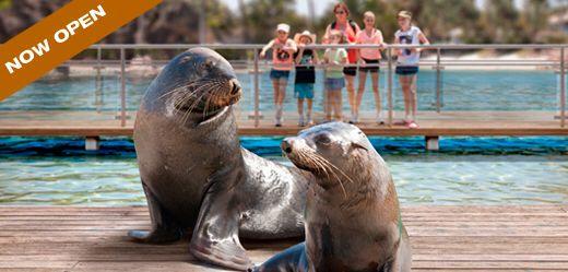 Sea Lion Harbour! :-)