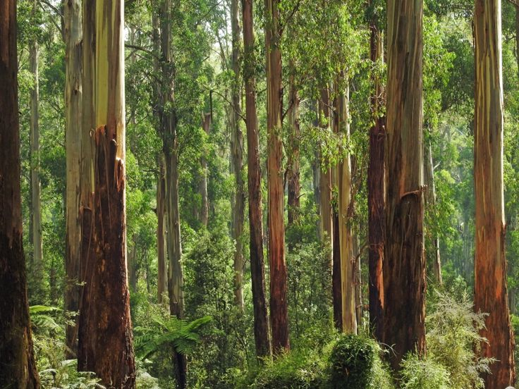 Reforestation.me Environment quotes: some environment quotes and reforestation quotes, includingagroforestry quotes, deforestation facts, figures and quotes, climate change quotes, science quotes,…