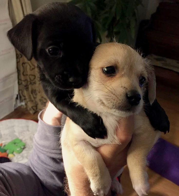 Help us name these two adoptable rescue puppies!