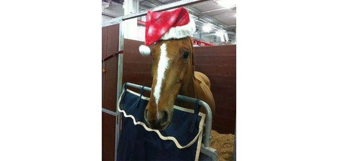 Jesus de la Commune di Luca Maria Moneta augura Buon Natale da tutti i suoi fan direttamente dall'Olympia Horse Show!