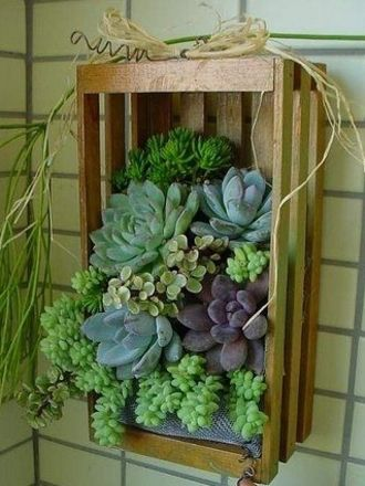 vertical succulent planter