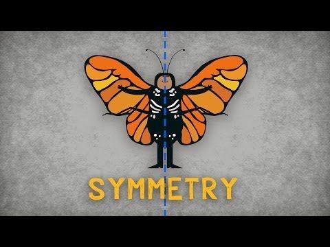 Nauka o symetrii - Colm Kelleher   TED-Ed