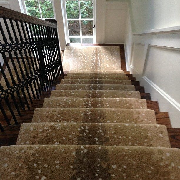 1000 images about stark carpet on pinterest carpets Antelope pattern carpet