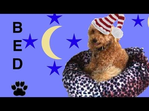 LEOPARD PRINT DOG BED - UP-CYCLED ANIMAL PRINT JUMPER -DIY craft - a tutorial by Cooking For Dogs - YouTube