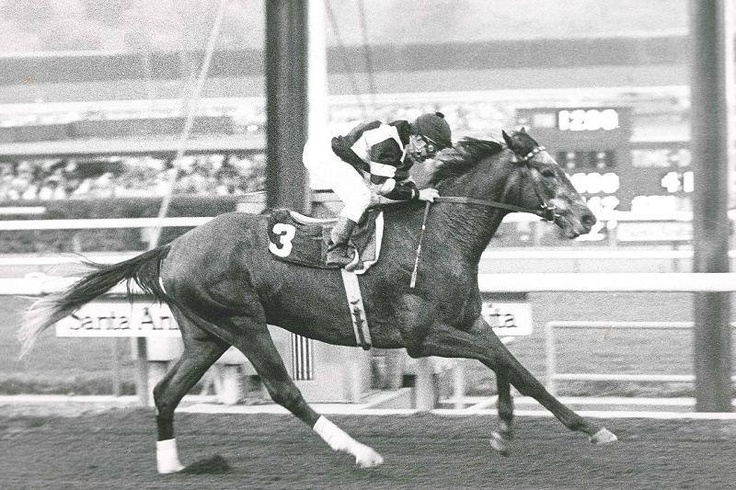 Spectacular Bid, winner of the 1979 Kentucky Derby and also the Preakness Stakes