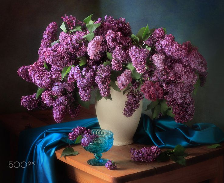 Still life with fragrant lilac - null