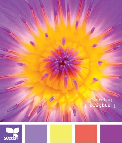 blooming brights: Color Palettes, Design Seeds, Color Inspiration, Color Combos, Color, Bright Color, Colors, Colour Palette