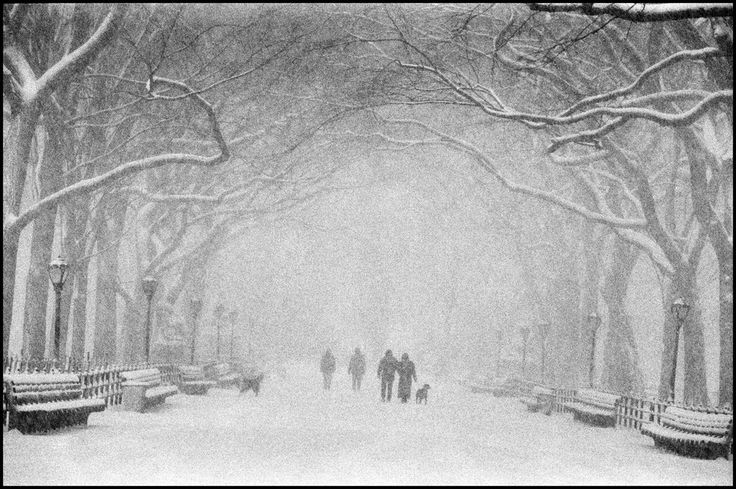 central park an escape essay An analysis of the central park five case in new york city pages 2 words 756  sign up to view the rest of the essay read the full essay more essays like this:.