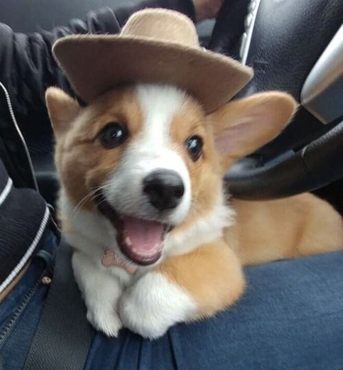 Image result for excited puppy