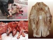 Prohibit the production and sale of fur in France