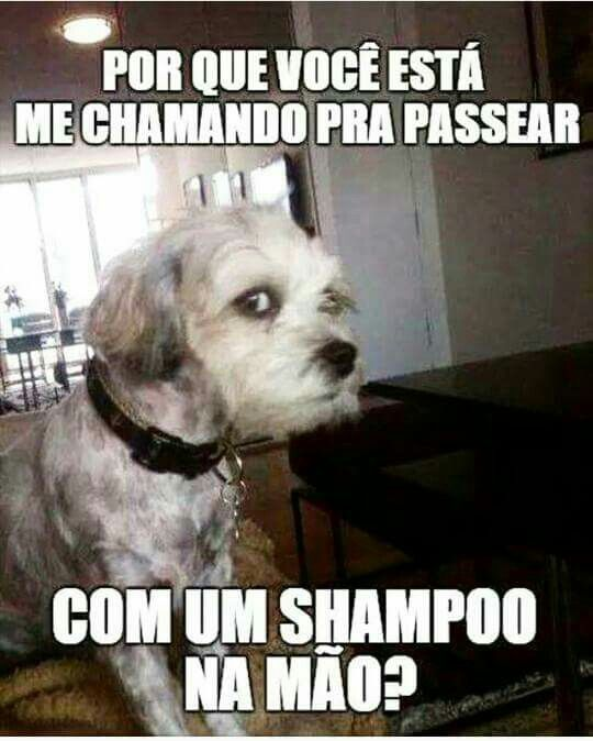 #Cachorrinhosabido#horadobanho#passear#rss