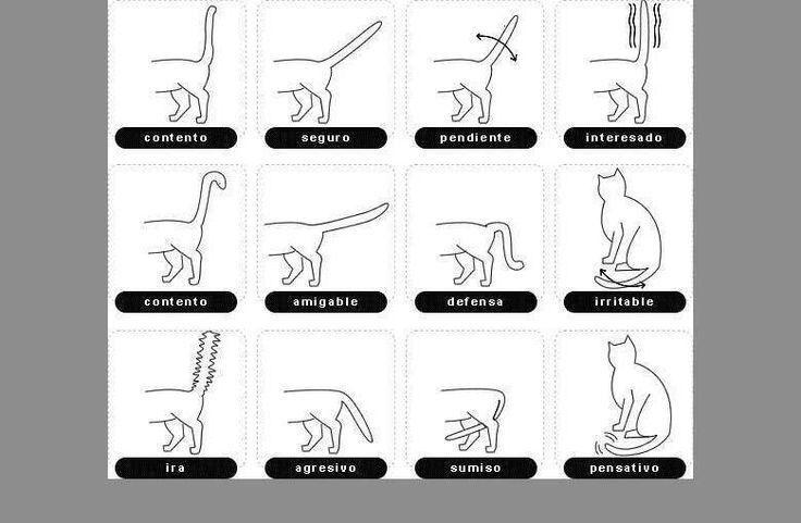 Lenguaje corporal del gato: la cola