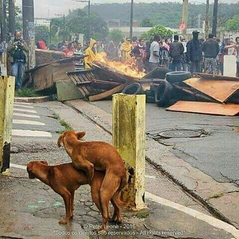 #Just4Fun - Il parait qu'au Nord ouest les chiens ne sont pas au courant de vous hein ? #Cameroun #Bamenda