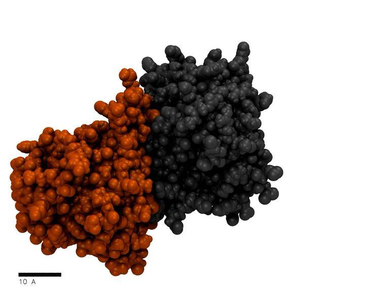 SMD simulation of Y211A mutation in machupo virus GP1 // Molecular dynamics simulation