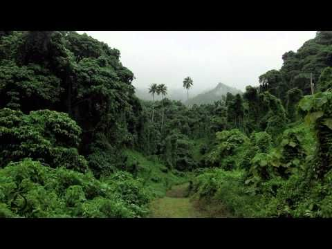 Jungle Sounds For Sleep And Relaxation - Rainforest Ambience Sound of Monkeys And Birds - YouTube