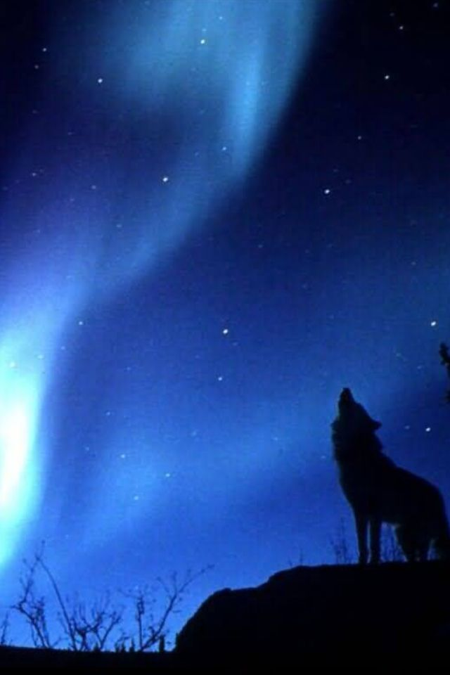 real northern lights wolf - photo #11