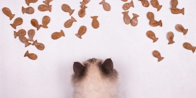 Рыбное печенье для кошек