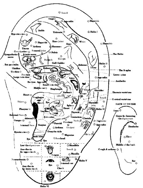 17 Best Ideas About Ear Anatomy