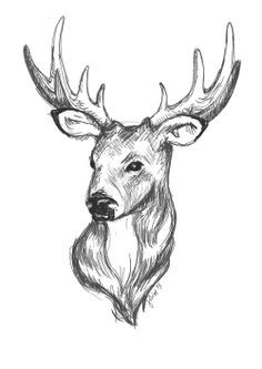 caribou drawing google search