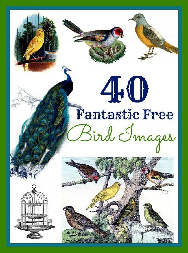silver jewellery rings 40 Favorite Bird Images  great for crafting  DIY and making Printables