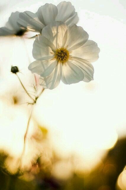 Withe flower