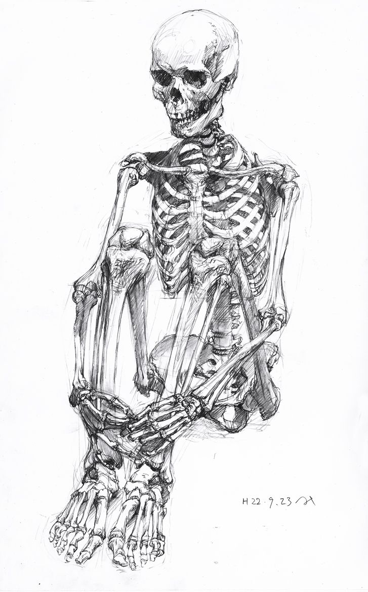 Human Skeleton Drawing Sitting