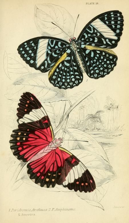 Foreign butterflies https://archive.org/stream/foreignbutterfli00dunc#page/160/mode/2up