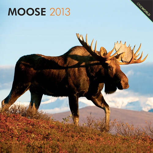 """Here we are. My Christmas present to Thranduil. :P :) @Rachel Mary  Moose Wall Calendar: Moose is the common name for this largest member of the Deer family. Moose is an Algonquin word that means """"eater of twigs,"""" which reflects the animal's diet. Moose live in different sorts of wooded areas of Canada and the northern United States, as they prefer a climate that seldom exceeds 60 degrees F."""