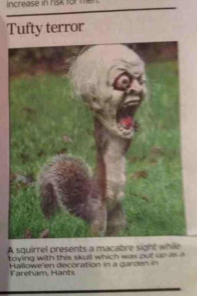 """This squirrel got his head stuck in a halloween decoration, scared the entire neighborhood.  One man said, """"It was the scariest thing I've ever seen""""."""