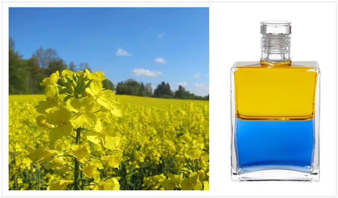 Mai 2016 - B8 Gelb/Blau - Anubis,  ...dieses, für den Mai so typische Bild, liebe ich über alles. Die gelben Rapsfelder und der blaue Himmel. Soooooo schön. Das überraschende ist aber, wenn man diese beiden Farben, das Gelb und das Blau vermischt, dann entsteht Grün. Diese Farbkombination erzählt also eine Geschichte über das Solarplexus-Chakra (Gelb), das Herz-Chakra (Grün) und das Hals-Chakra (Blau).   Wer hätte das gedacht?