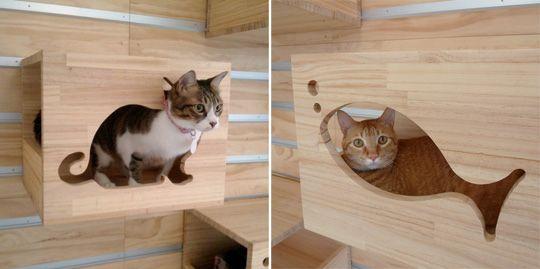 Best 25 Cat Climbing Wall Ideas On Pinterest Cat
