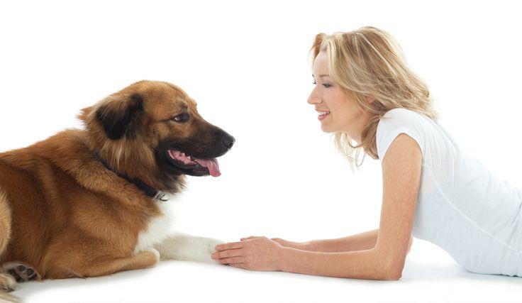 """Cómo aprende su perro Una de las quejas más frecuentes de los padres de mascotas es que sus perros """" no escuchan"""". Pero ponerse en los zapatos de su perro por un momento. Si alguien estaba charlando constantemente en una lengua extranjera que nunca había escuchado antes. ¿Cuánto tiempo le …"""