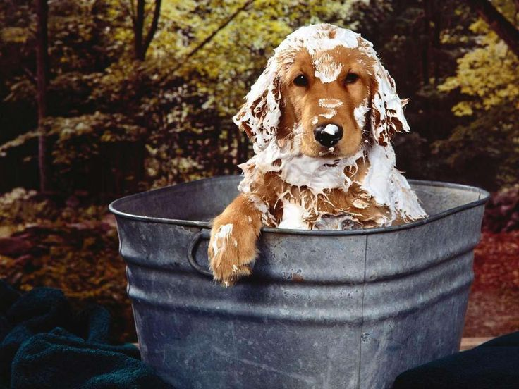 The expression Maddie would give us when we bathed her! LOL Miss u, Maddie-dog!
