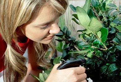 Mit Spülmittel gegen Blattläuse: Tipp auf for me
