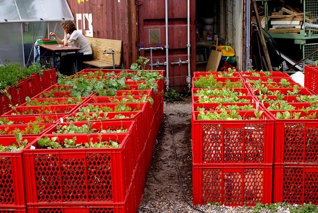 Huerta urbana con canastos de plástico: ¡gran idea!