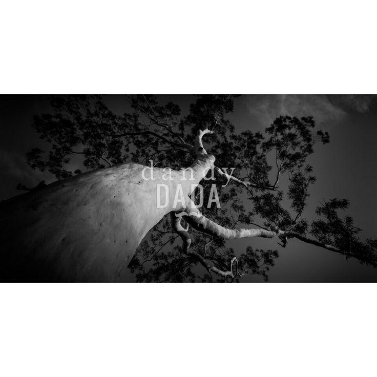 One Tree #tasmania,#nature,#tree,#save,#photo,#artcollection,#art,#sky,