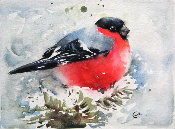 17 Best images about Watercolor Birds tutorials on ... Снегирь Png