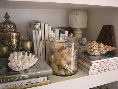 Shelf scape with shells