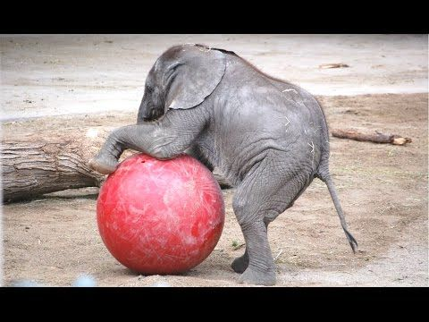 Cute Baby Elephant - A Cute And Funny Baby Elephant Videos Compilation || NEW HD - YouTube