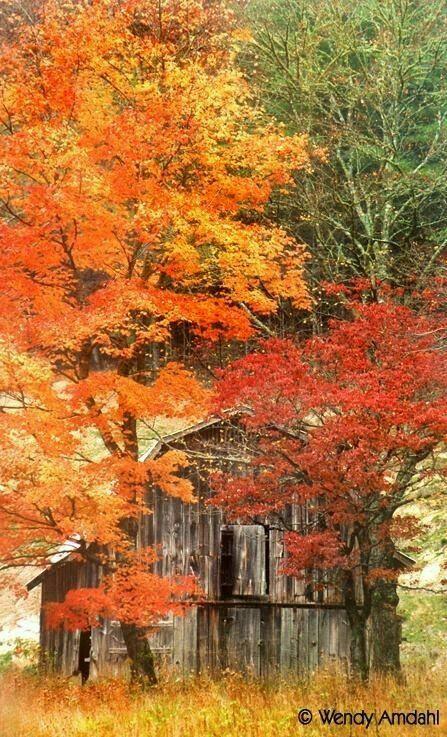 Beautiful fall nature photo